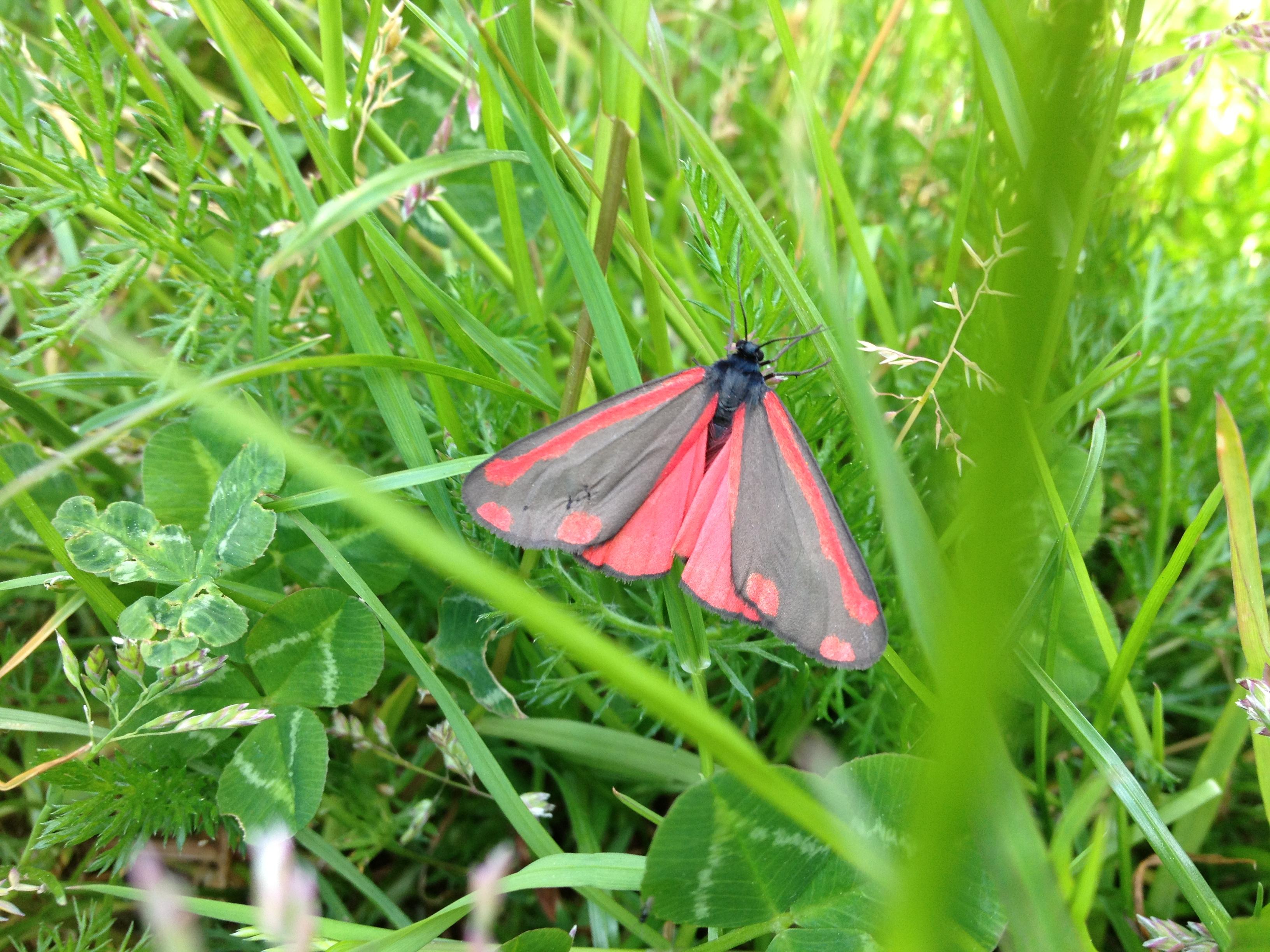 un mur de moucheron  u0026 un papillon